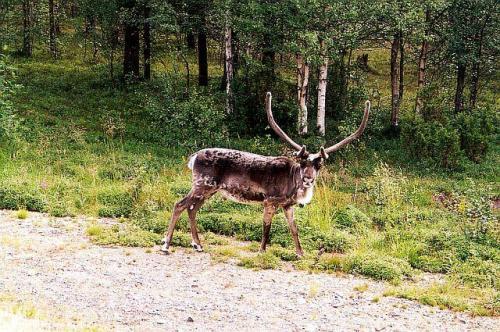 Fínsko 2002